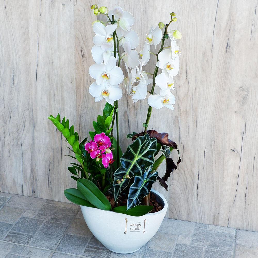 Επαγγελματικά Δώρα - Συνθέσεις Φυτών - Ορχιδέα  - Συνθεση ορχιδέας