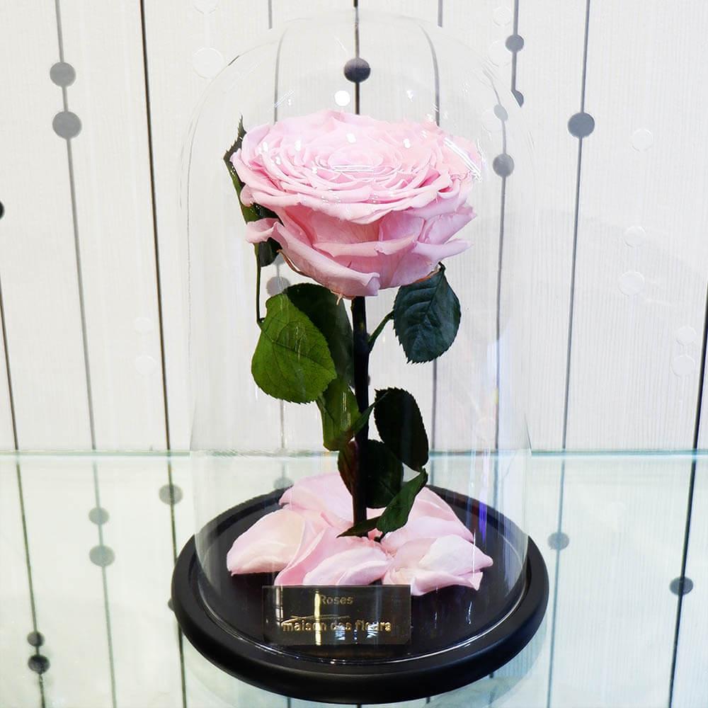 Forever Roses Big PInk