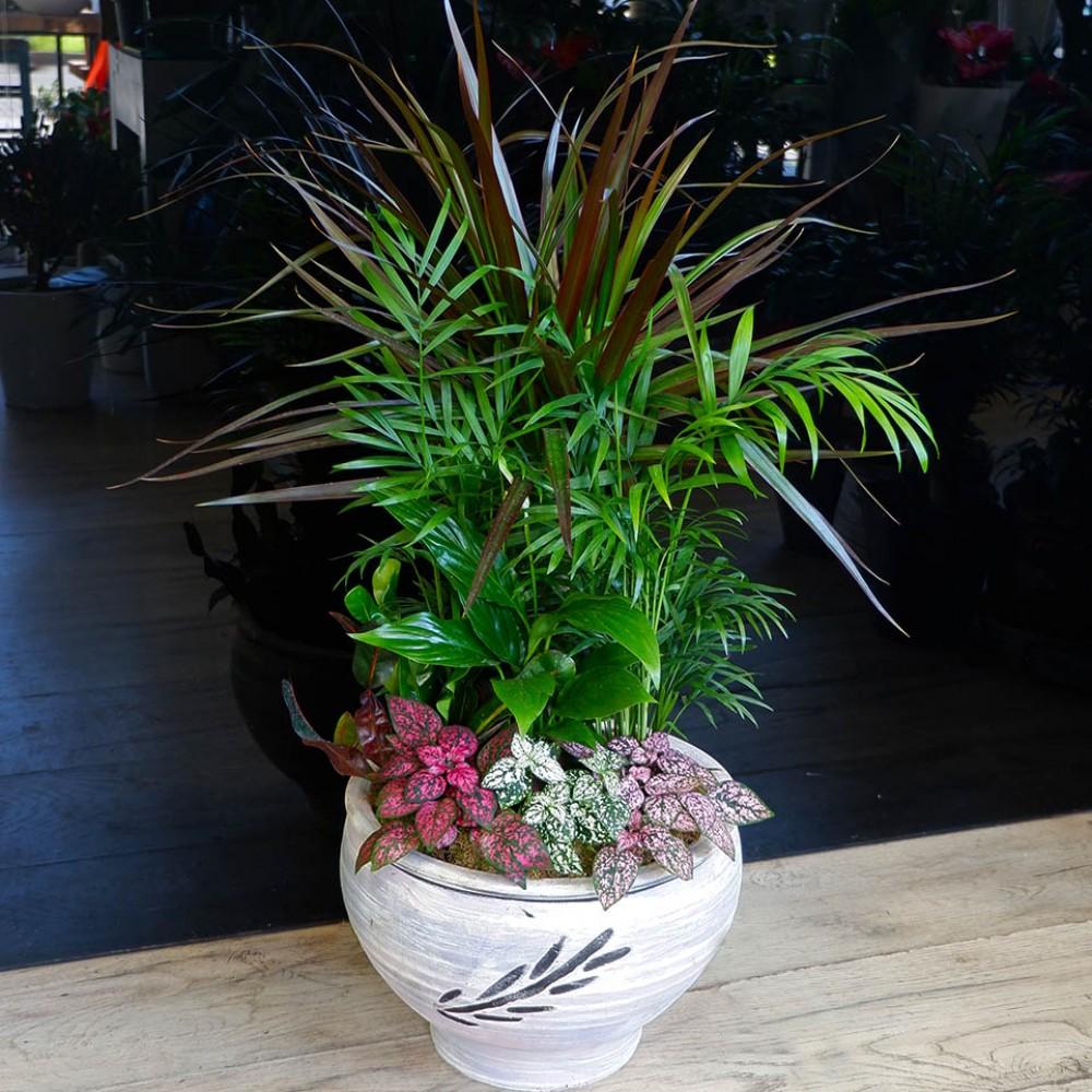 Medium Plant composition