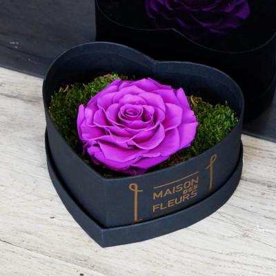 Μοβ τριαντάφυλλο