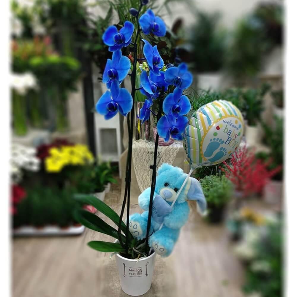Μπλε ορχιδέα Νεογέννητο