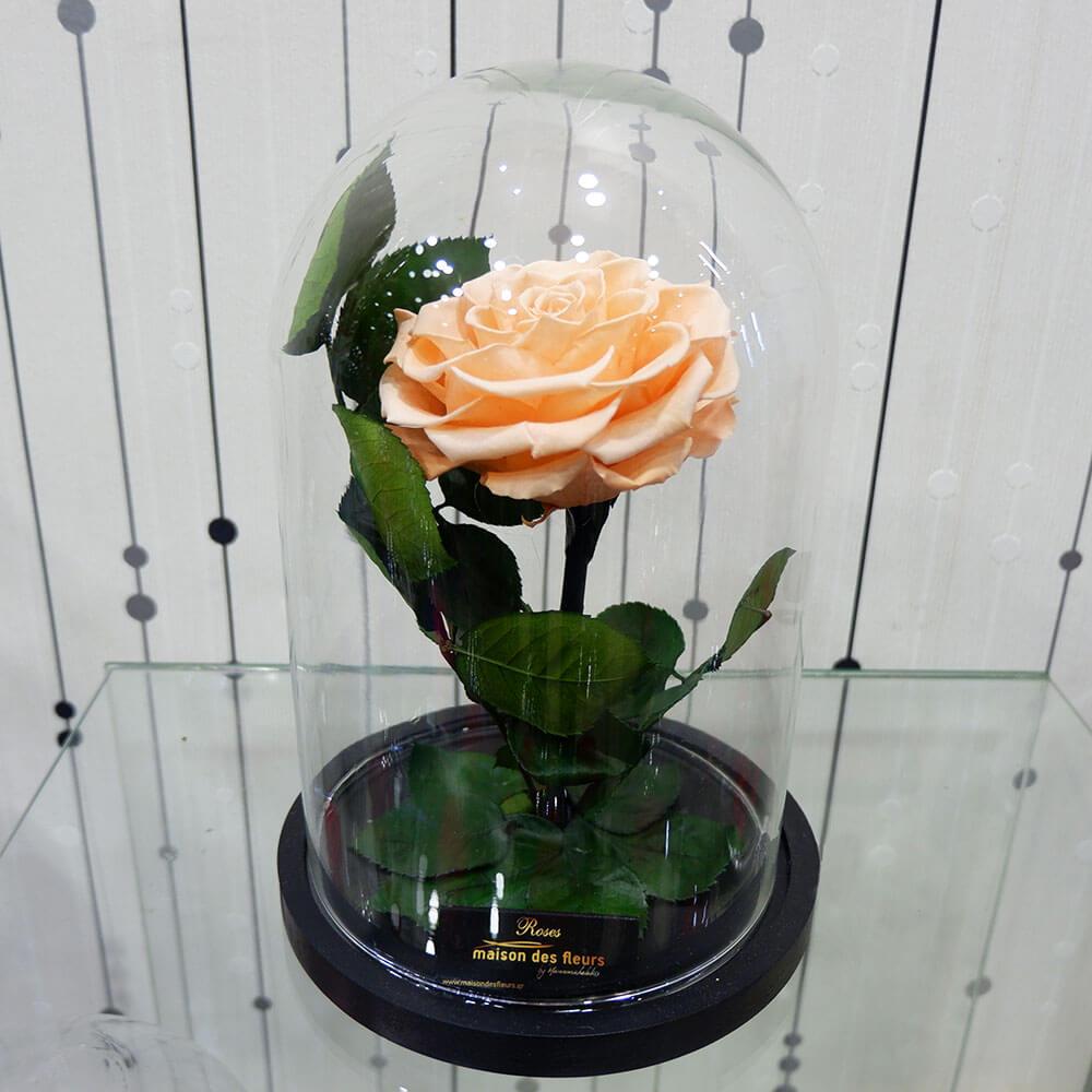 Forever Roses - Forever Somon