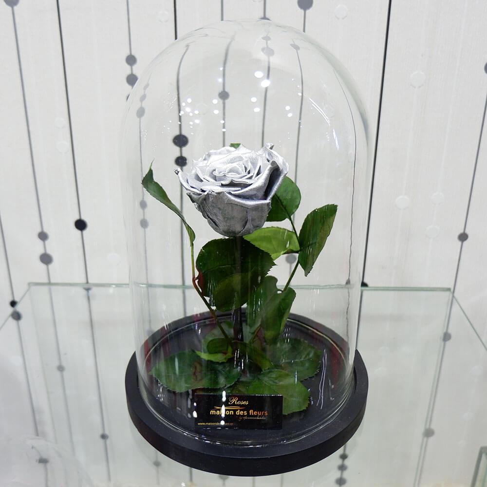 Forever Roses - Forever Silver
