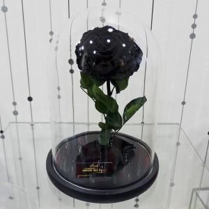 Forever Roses - Forever big black
