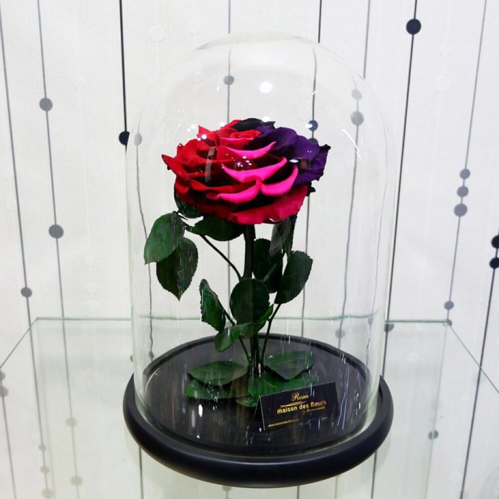 Forever Roses - Forever Black Purple