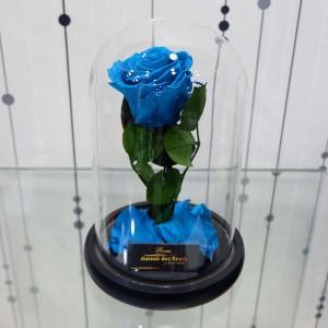 Forever Light blue
