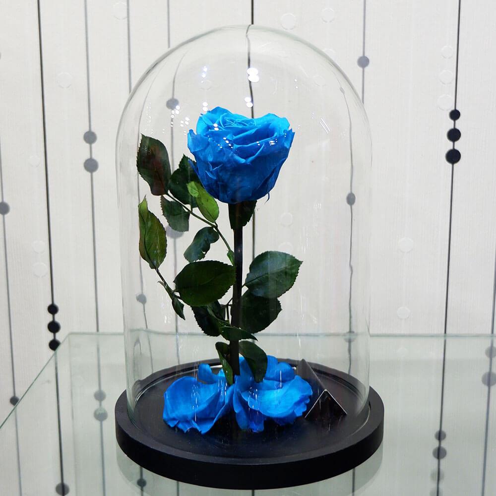 Forever Roses - Forever Light blue