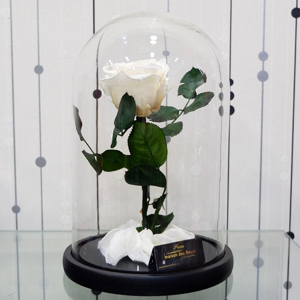 Forever Roses White 1