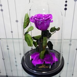 Forever Roses Purple