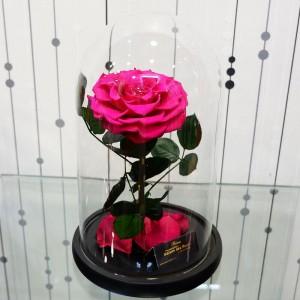 Forever Roses Big Fuchsia