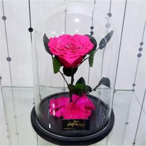 Λουλούδια Αγάπης - Forever Roses - Forever Love Fuchsia