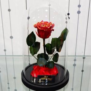 Forever Roses - Forever Red Gold
