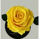 Forever Roses Yellow