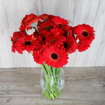 Red Gerbera - Create your own bouquet with Red Gerberas!