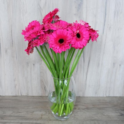 Fuchsia gerbera - Create your own bouquet with Fuchsia gerberas!