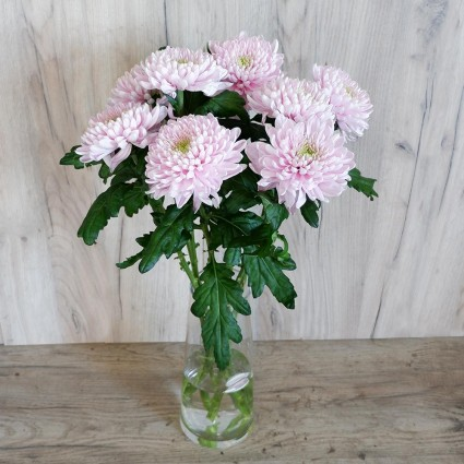 Pink chrysanthemum one head - Create your own bouquet with White chrysanthemums One Head!