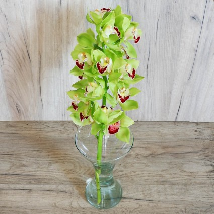 Green Cymbidium - A clone of green orchid cimbidium with a variety of foliage & impressive wrapping!