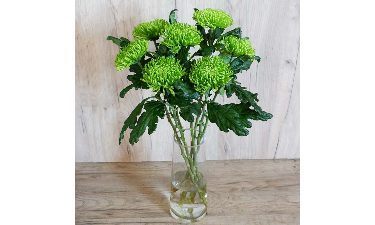 Green chrysanthemum one head - Create your own bouquet with Green chrysanthemums!