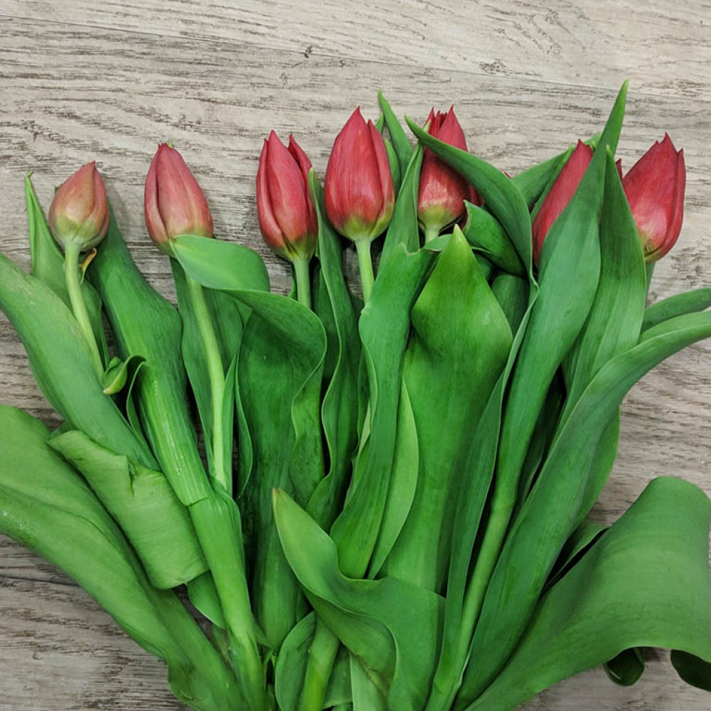 Red Tulip - Create your own bouquet with Tulips of different colors!