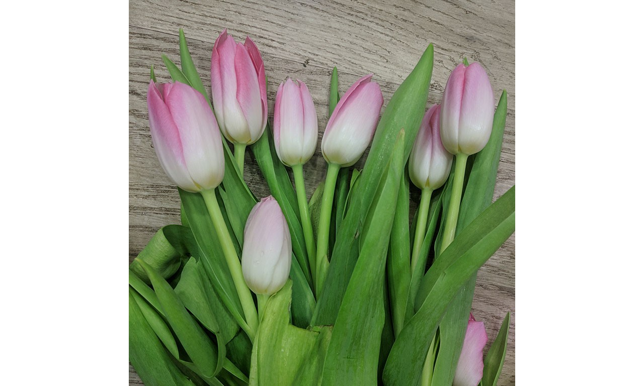 Tulip - Create your own bouquet with Tulips of different colors!