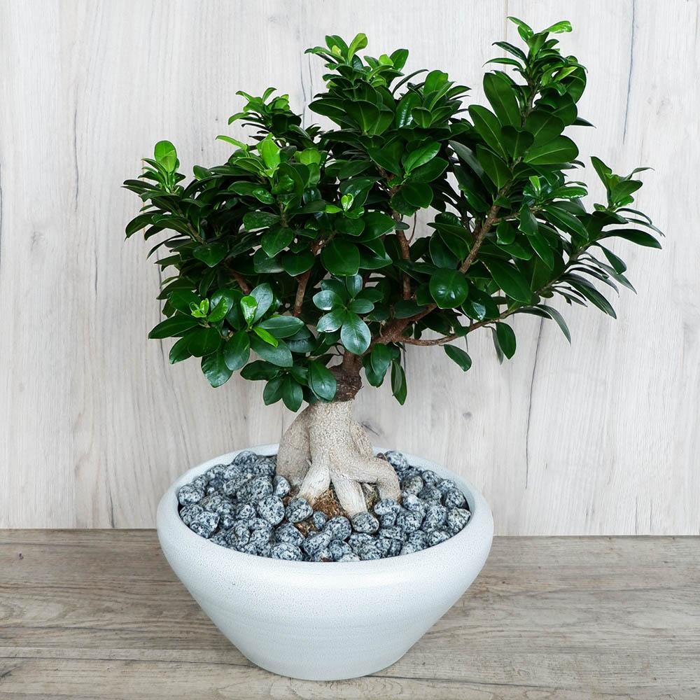 Bonsai 3   Ανθοπωλείο Maison des fleurs