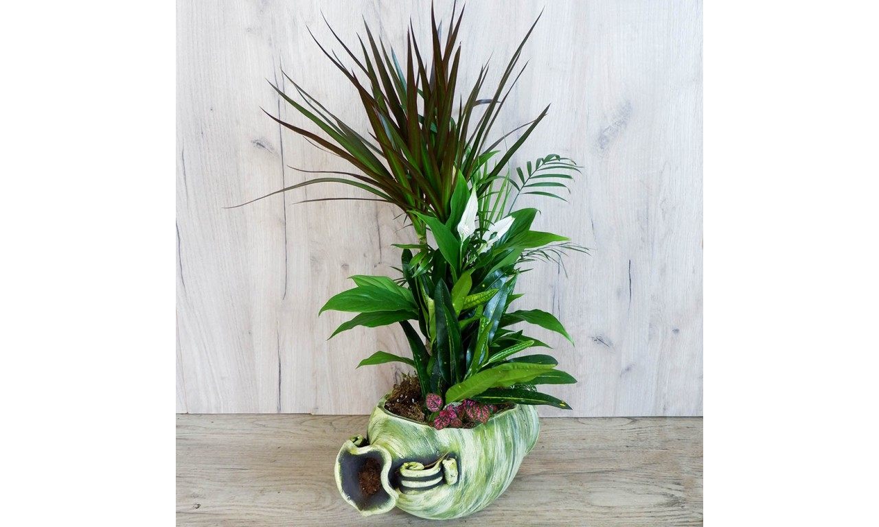 Colourful Plant Composition - Plant Composition with a variety of small plants