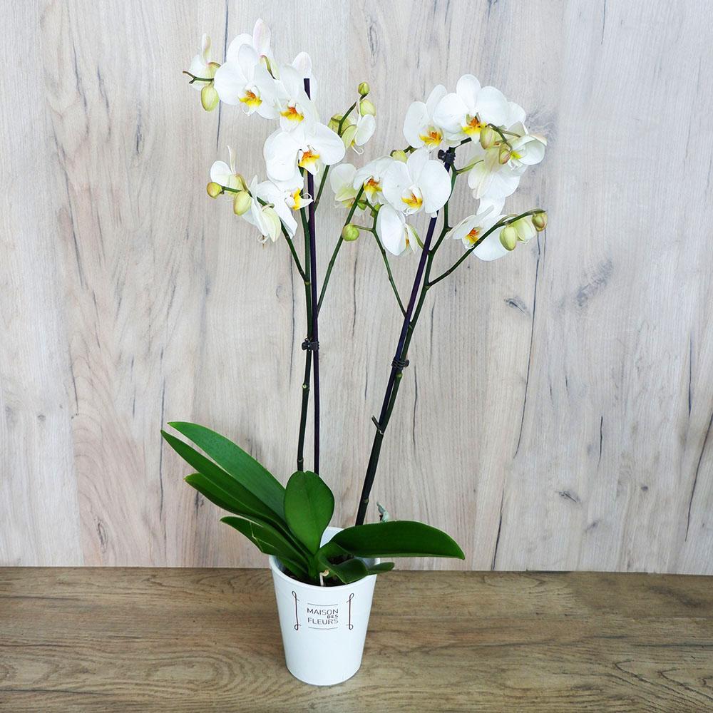 Επαγγελματικά Δώρα -  Ορχιδέα Phalaenopsis σε πήλινη βάση.  3 χρώματα - Λευκό, Λιλά & Μωβ!