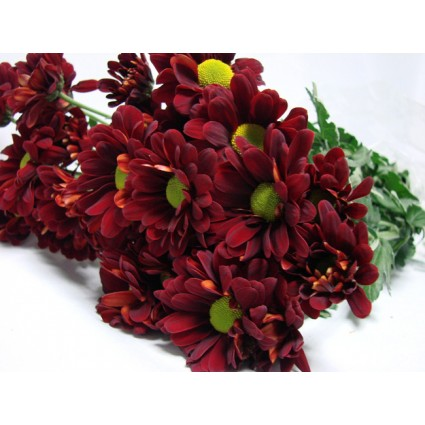 Red Chrysanthemum - Create your own bouquet with Red Chrysanthemums!