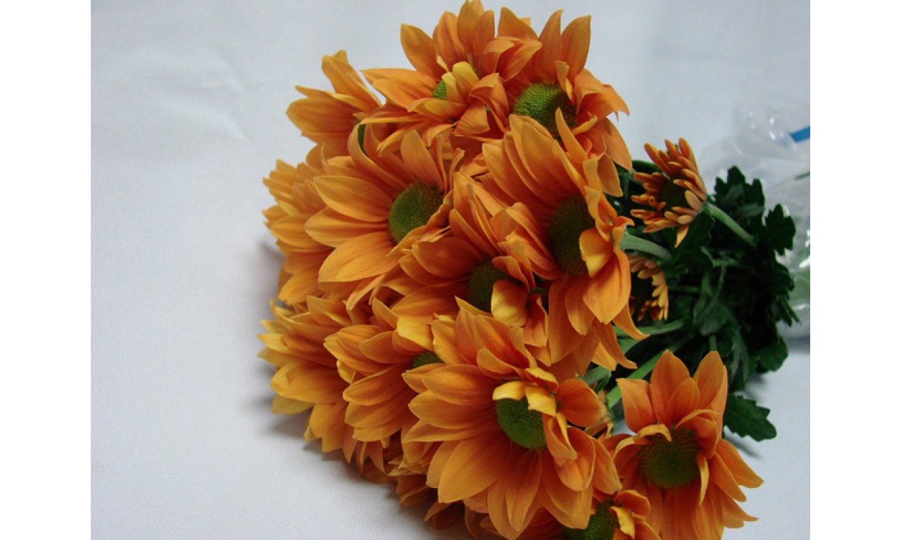 Orange Chrysanthemum - Create your own bouquet with Orange Chrysanthemums!