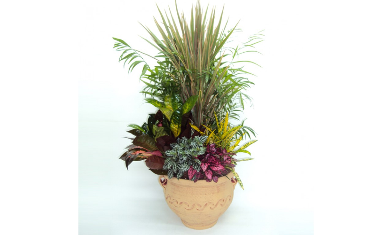 Medium Plant composition - Impressive plant composition with a variety of small plants