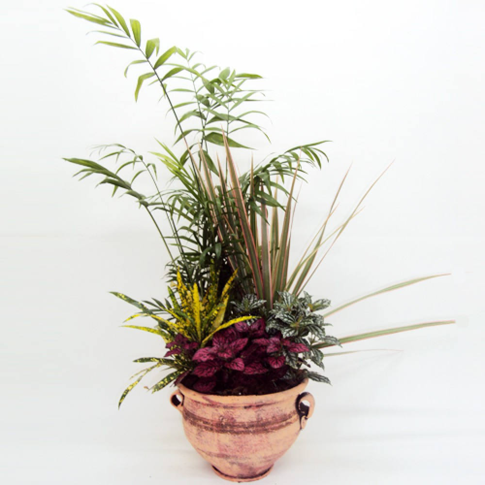 Small Plant composition - Impressive plant composition with a variety of small plants!