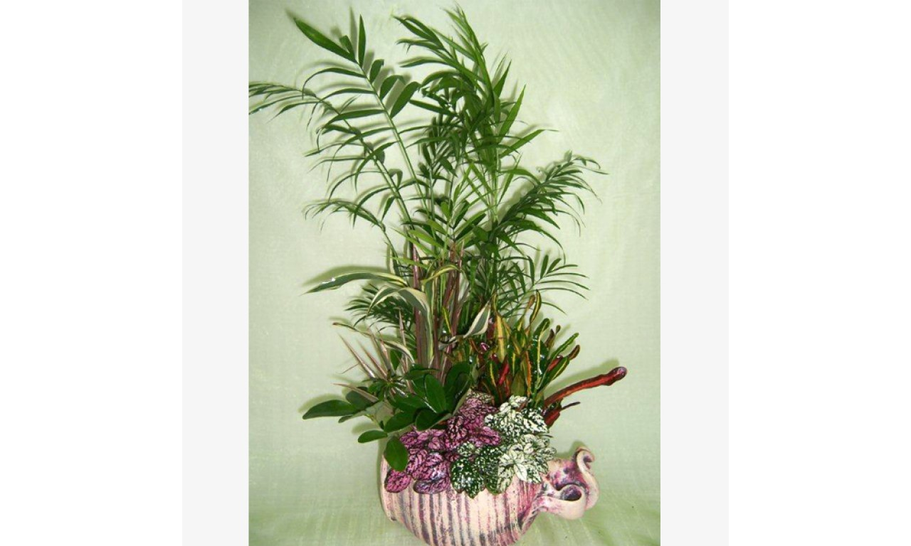 Stein Plant Composition - Impressive plant composition with a variety of small plants in a stein!