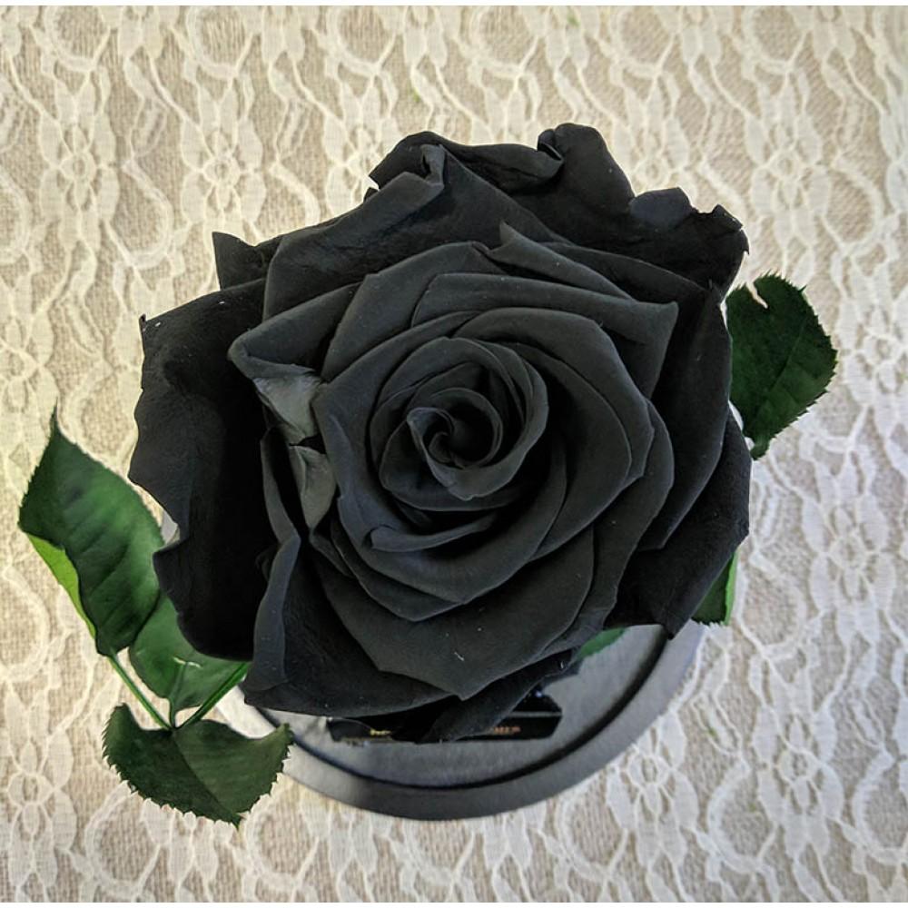 Forever Roses - Forever Black