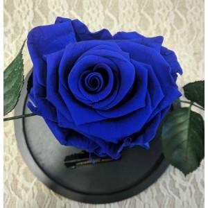 Forever blue 2