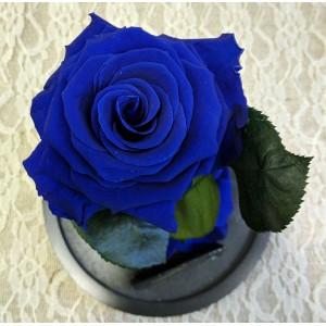 Forever Roses - Forever Blue